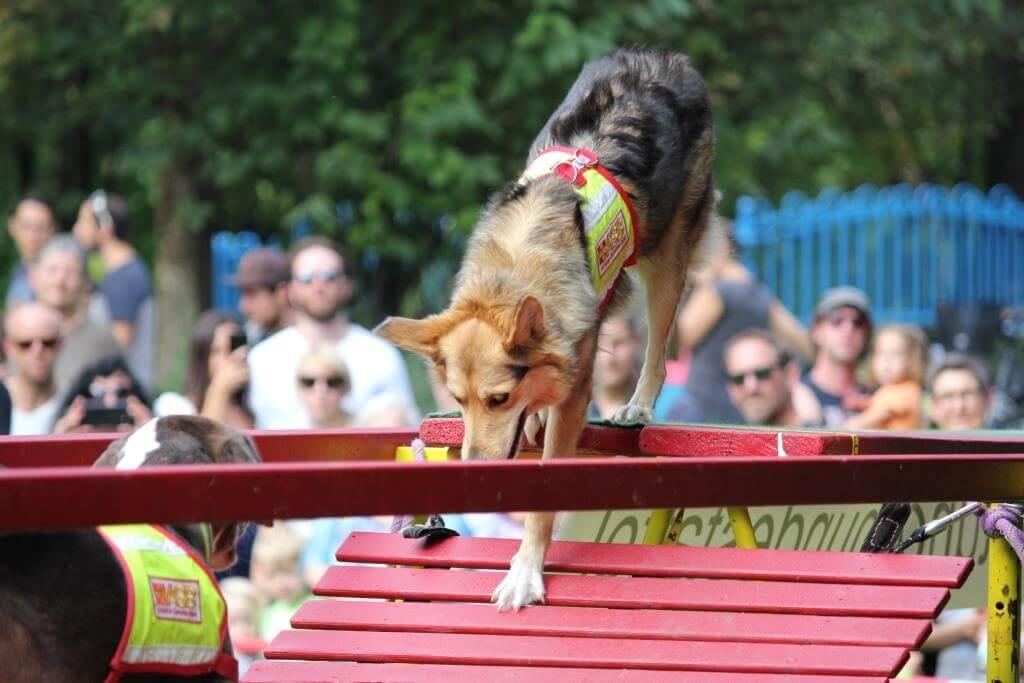IsarInselFest_Rettungshundestaffel-ASB-Muenchen3.JPG