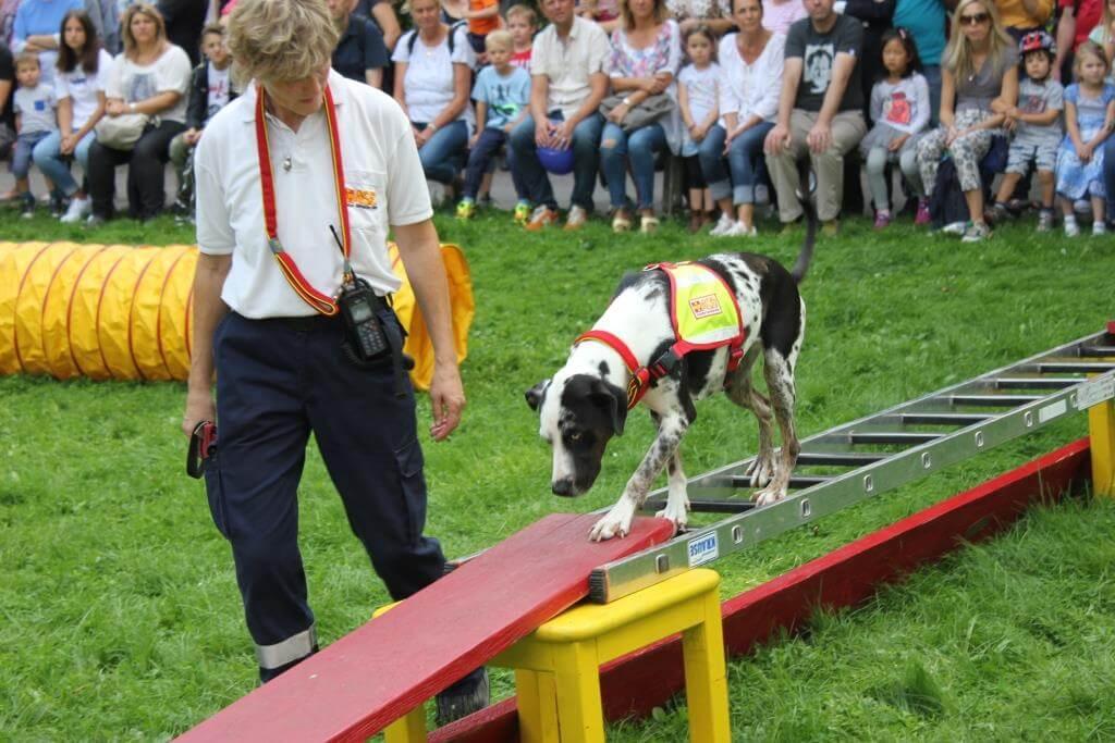 IsarInselFest_Rettungshundestaffel-ASB-Muenchen4.JPG