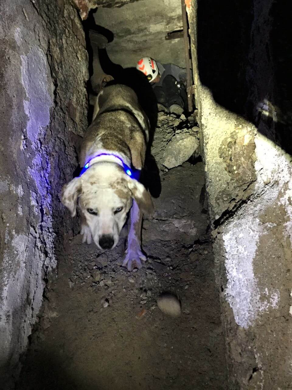 Trümmersuchhund-96dpi (2).jpg